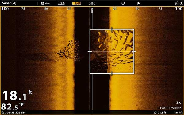 Side imaging found fish
